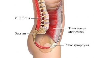 Post-Natal Assessments - Abdominal Muscles - Revive Physiotherapy and Pilates